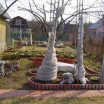 Учимся ухаживать за садом и огородом осенью