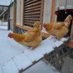 Подготовка к разведению птиц