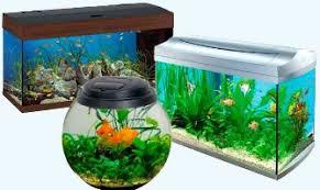 Как правильно выбрать аквариум и как его наполнить